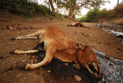 так будут к чему снятся мертвые коровы дни ноябре объединены