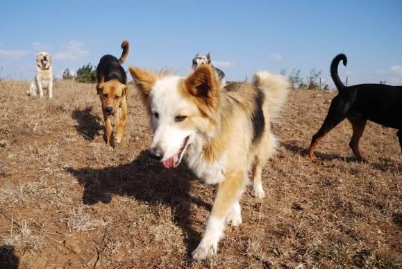 Dogs at Corner Baridi.jpg
